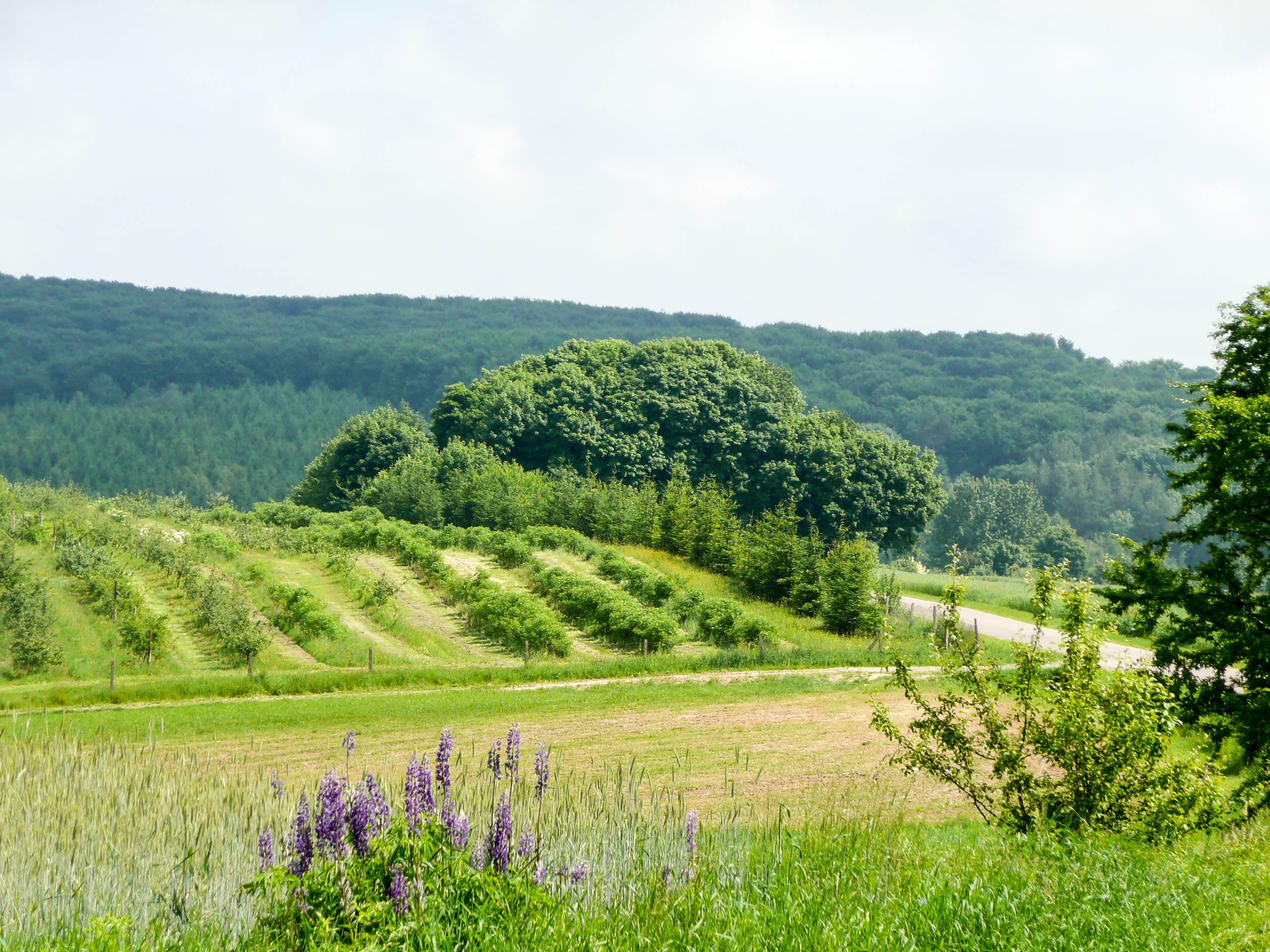 siedlisko wiejskie blisko lasu Olszanka - dom na sprzedaż - Krzysztof Górski Nieruchomości Zamość